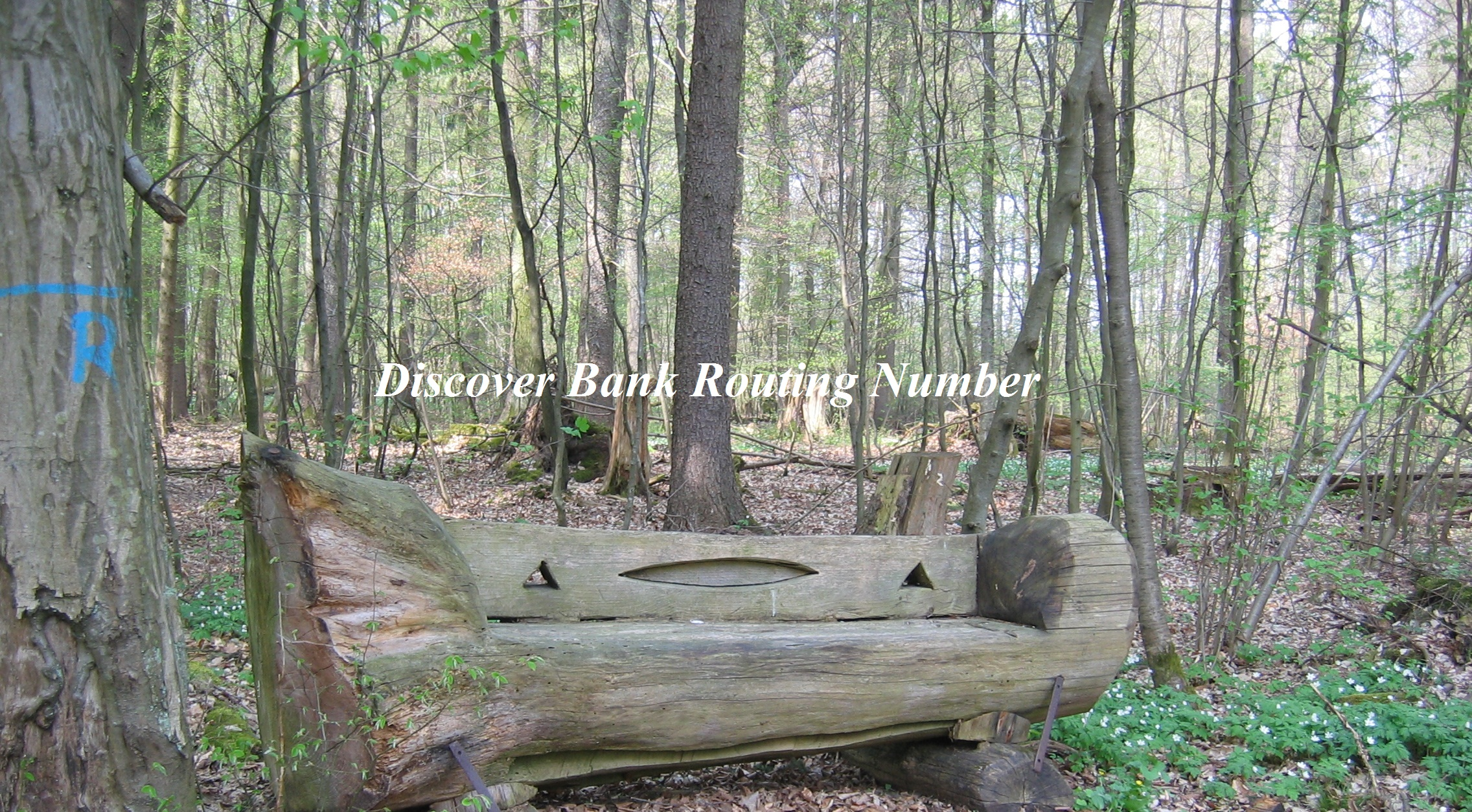 Discover Bank Routing Number