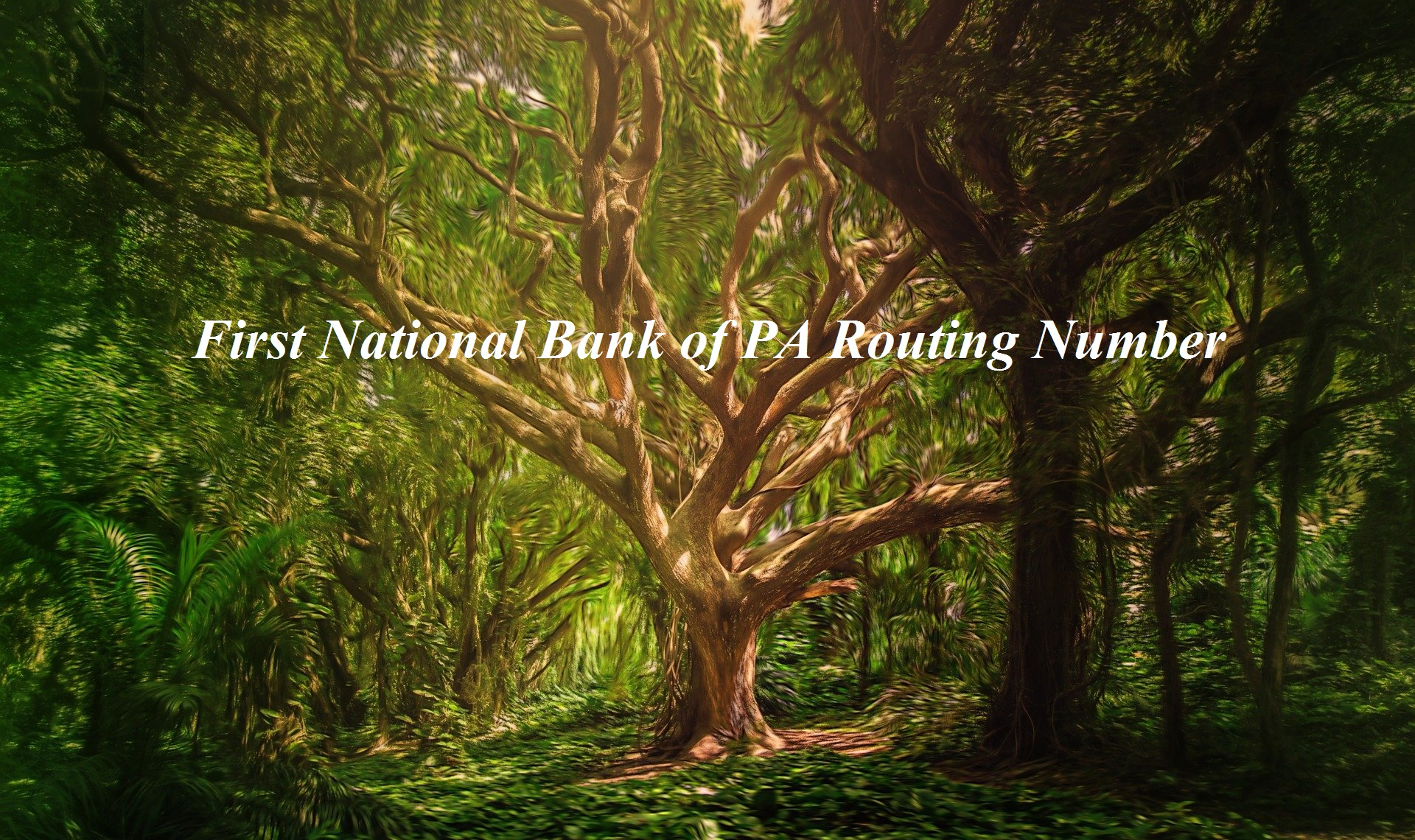 First National Bank of PA Routing Number