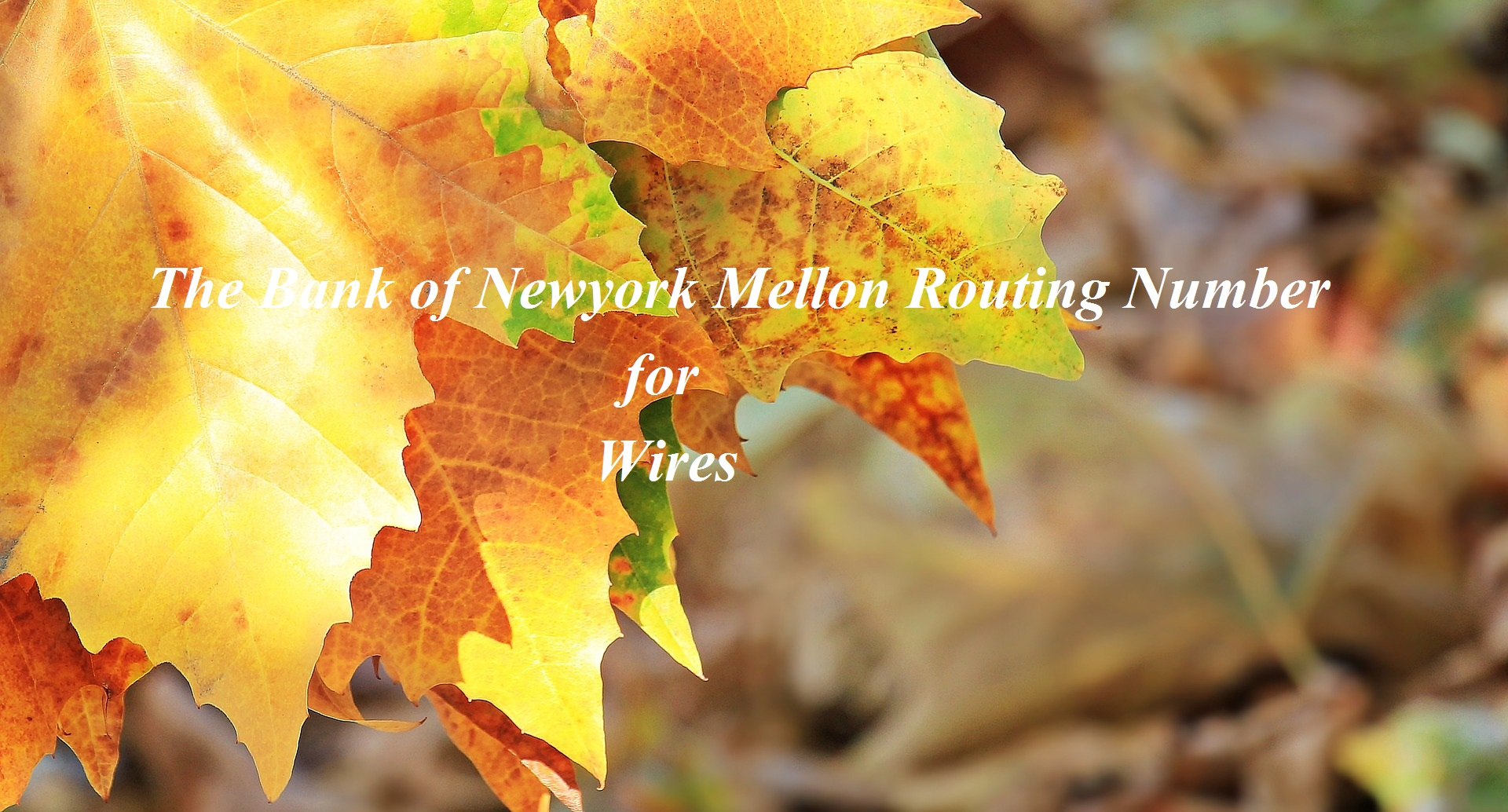 The Bank of Newyork Mellon Routing Number for Wires