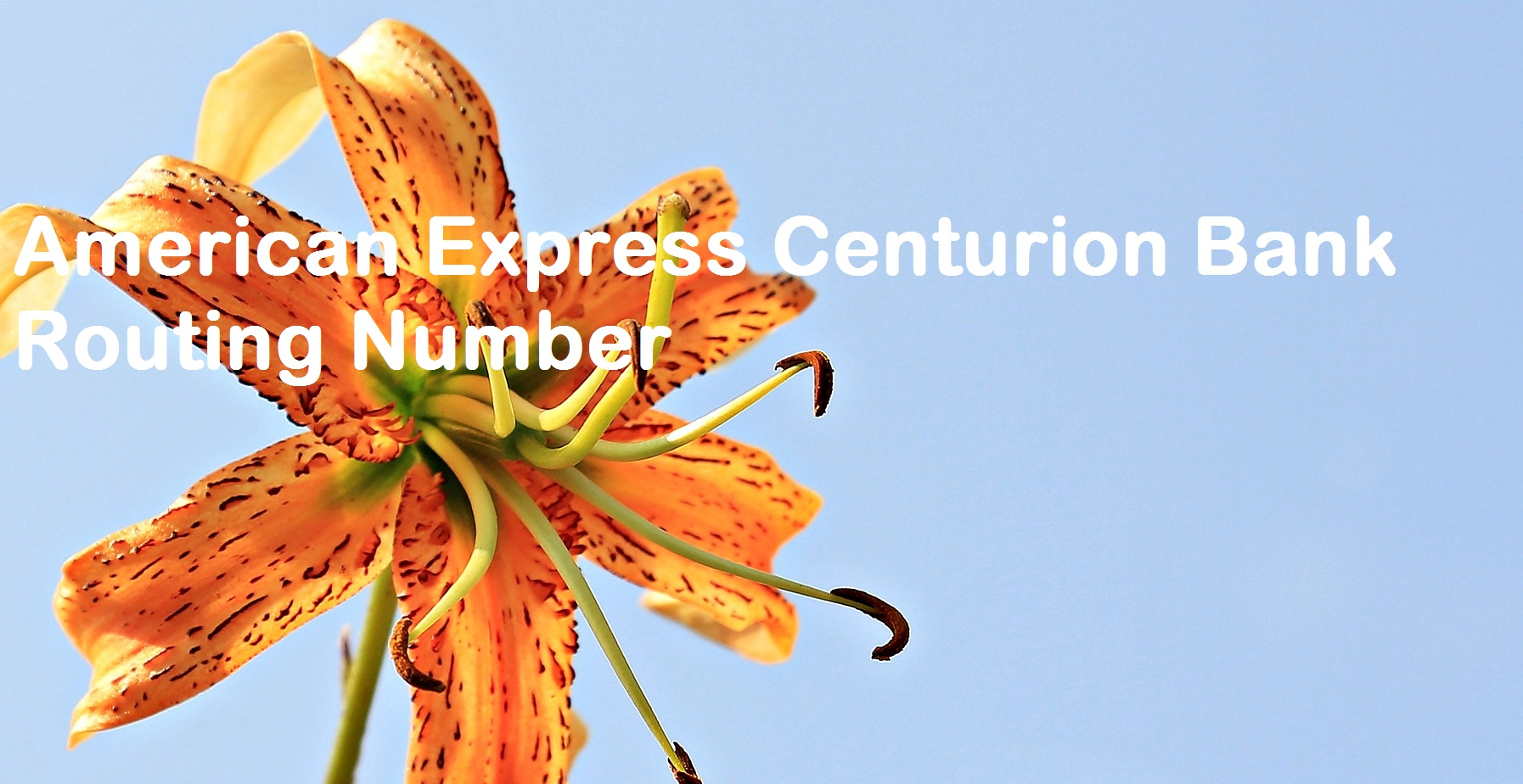 American Express Centurion Bank Routing Number