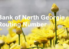 Bank of North Georgia Routing Number
